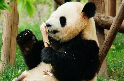 Chengdu Panda Sanctuary